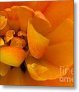 Yellow Double Tulip Metal Print