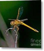 Yellow Dragonfly Metal Print