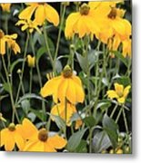 Yellow Echinacea Metal Print