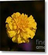 Yellow Fall Flower Metal Print