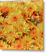 Yellow Fall Mums Metal Print