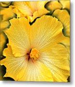 Yellow Fantasy Hibiscus Flowers Metal Print