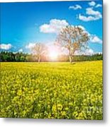 Yellow Field Metal Print