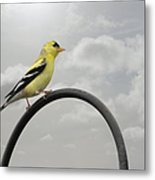 Yellow Finch A Bright Spot Of Color Metal Print by Christine Till