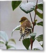 Goldfinch On Branch Metal Print