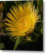 Yellow Flower 1.7103 Metal Print