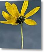 Yellow Flower Against A Stormy Sky Metal Print