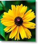 Yellow Flower - Featured 3 Metal Print