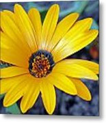 Yellow Flower Helianthus Metal Print