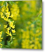 Yellow Flower In The Tree Metal Print