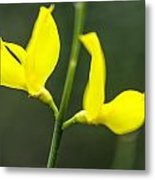 Yellow Flower Metal Print by Slavica Koceva