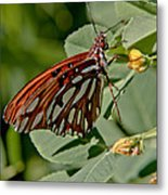Yellow Flower With Gulf Fritillary Butterfly Metal Print