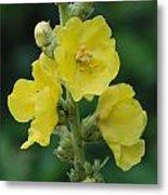 Yellow Flowers - 2 Metal Print