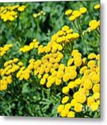 Yellow Flowers 3 Metal Print