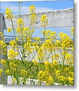 Yellow Flowers And A White Fence Metal Print