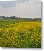 Yellow Flowers In A Field Metal Print
