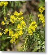Yellow For Summer Metal Print