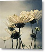 Yellow Gerber Daisy Metal Print