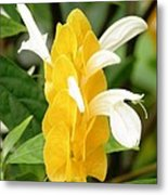 Yellow Ginger Blossom Metal Print