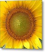 Yellow Glory #1 Metal Print