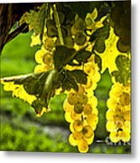 Yellow Grapes In Sunshine Metal Print