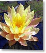 Yellow Hardy Water Lily Metal Print