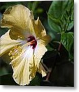 Yellow Hawaiian Hibiscus Metal Print