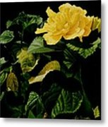 Yellow Hibiscus Metal Print
