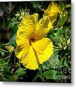 Yellow Hibiscus Hawaii State Flower Metal Print