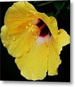 Yellow Hibiscus In The Rain Metal Print