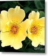 Yellow Hybiscus Metal Print