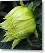 Yellow In Bloom Metal Print