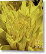 Yellow It Is Metal Print