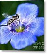 Blue Flax Flower Metal Print