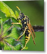 Yellow Jacket Metal Print