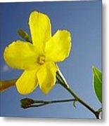 Yellow Jasmine Flower And Bud Against Blue Sky Metal Print