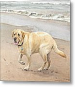 Yellow Lab On Beach Watercolor Portrait Metal Print