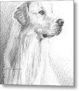 Yellow Labrador Show Dog Pencil Portrait Metal Print