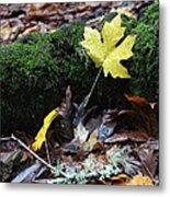 Yellow Leaf Metal Print