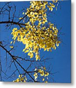 Yellow Leaves In Fall And Deep Blue Sky Metal Print