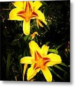 Yellow Lilies Metal Print