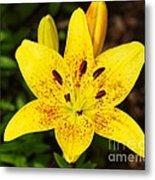 Yellow Lily Metal Print
