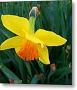 Yellow Lily Flower Metal Print