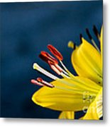 Yellow Lily Stamens Metal Print
