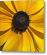 Yellow Macro Metal Print