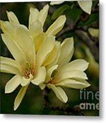 Yellow Magnolia Metal Print
