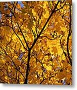 Yellow Maple 3 Metal Print