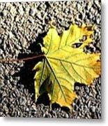 Yellow Maple Leaf On Asphalt Metal Print