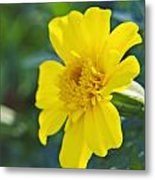 Yellow Marigold Metal Print