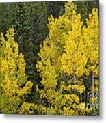 Yellow On Green Metal Print
